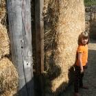 Arata Pumpkin Farm Hay Maze Half Moon Bay