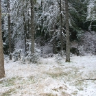 Castle Rock State Park Snow Play in the Santa Cruz Mountains