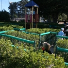 Dennis the Menace Park maze