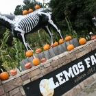 Lemos Farm Half Moon Bay