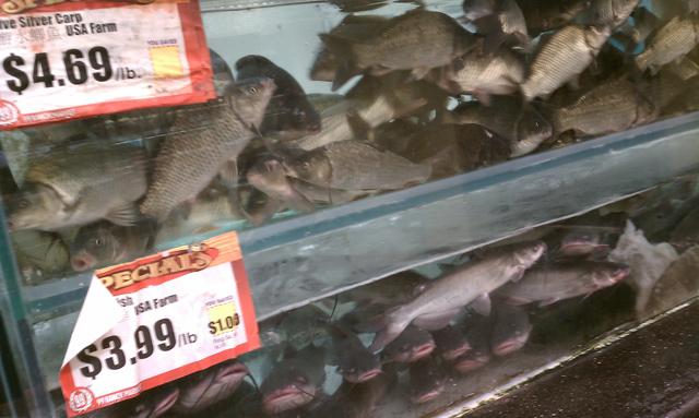 99 Ranch Market Live Fish Aquarium
