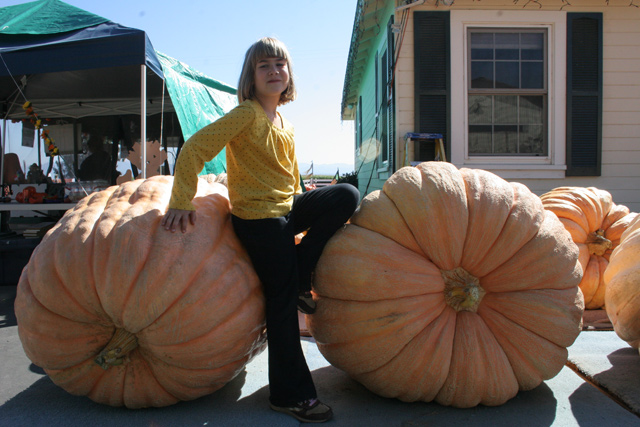 borchard giant pumpkins